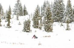Fundo do inverno da raça de cão de trenó da fuga de Iditarod Imagem de Stock Royalty Free