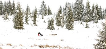 Fundo do inverno da raça de cão de trenó da fuga de Iditarod Imagens de Stock