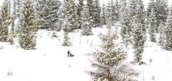 Fundo do inverno da raça de cão de trenó da fuga de Iditarod Foto de Stock