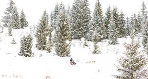 Fundo do inverno da raça de cão de trenó da fuga de Iditarod Fotos de Stock