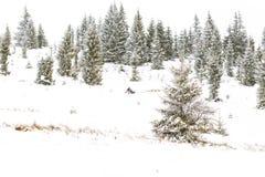 Fundo do inverno da raça de cão de trenó da fuga de Iditarod Foto de Stock Royalty Free