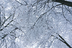 Fundo do inverno do conto de fadas com ramos de árvore no céu Fotografia de Stock Royalty Free