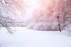Fundo do inverno, paisagem Árvores do inverno no país das maravilhas Inverno imagens de stock