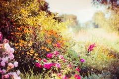 Fundo do jardim do outono com as várias flores da queda Fotos de Stock