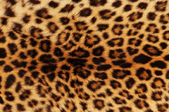 Fundo do leopardo Imagem de Stock Royalty Free