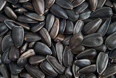 Fundo do macro das sementes de girassol Fotos de Stock