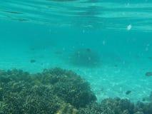Fundo do mar fotografia de stock