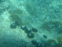 Fundo do mar adriático de água-marinha fotografia de stock