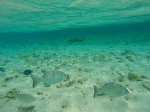 Fundo do mar com peixes e água azul Foto de Stock