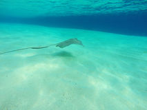 Fundo do mar com peixes e água azul Fotos de Stock Royalty Free