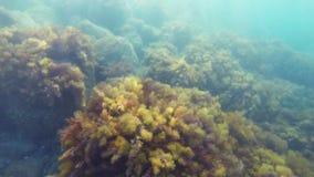 Fundo do mar com vegetação subaquática e as grandes pedras vídeos de arquivo