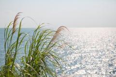 Fundo do mar e da grama Foto de Stock