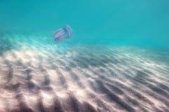 Fundo do mar, luz solar, areia, com fotos de stock