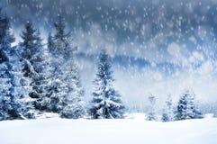 Fundo do Natal com abeto nevado Fotografia de Stock