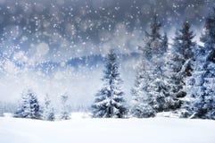 Fundo do Natal com abeto nevado Foto de Stock