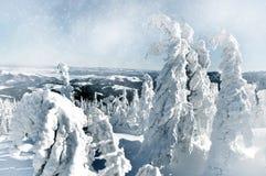 Fundo do Natal com abeto nevado Imagem de Stock Royalty Free