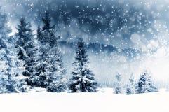 Fundo do Natal com abeto nevado Fotografia de Stock Royalty Free