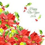 Fundo do Natal com as flores vermelhas frescas e Imagem de Stock Royalty Free