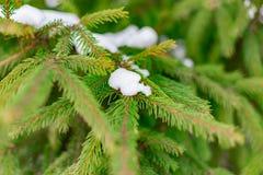 Fundo do Natal com neve na refeição matinal verde do pinheiro fotografia de stock