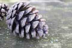 Fundo do Natal com os cones do pinho no tom do vintage Imagem de Stock