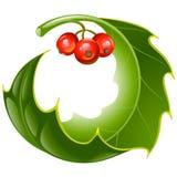 Fundo do Natal e do ano novo, azevinho de do vetor Foto de Stock
