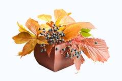 Fundo do outono imagens de stock royalty free