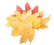 Fundo do outono. imagem de stock