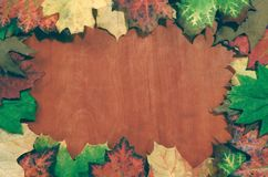 Fundo do outono imagens de stock