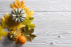Fundo do outono com abóboras e folhas imagens de stock royalty free