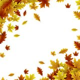 Fundo do outono com as folhas do bordo e do carvalho ilustração stock