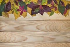 Fundo do outono com as folhas coloridas na placa de madeira Fotos de Stock