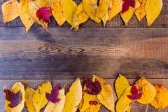 Fundo do outono com as folhas coloridas na placa de madeira imagens de stock royalty free