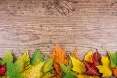 Fundo do outono com as folhas de bordo coloridas da queda na tabela de madeira rústica Conceito dos dias de ação de graças verde, Imagem de Stock