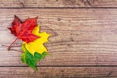 Fundo do outono com as folhas de bordo coloridas da queda na tabela de madeira rústica Conceito dos dias de ação de graças verde, Fotografia de Stock