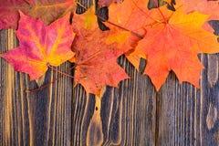 Fundo do outono com as folhas de bordo coloridas da queda na tabela de madeira rústica Dias de ação de graças do conceito Imagens de Stock