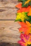 Fundo do outono com as folhas de bordo coloridas da queda na tabela de madeira rústica Dias de ação de graças do conceito Fotos de Stock Royalty Free