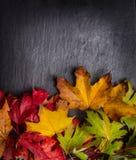 Fundo do outono com as folhas de outono coloridas na ardósia escura Fotos de Stock