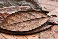Fundo do outono com as folhas secadas das linhas naturais da floresta de folha da planta Textura de muitas peças secas da árvore foto de stock