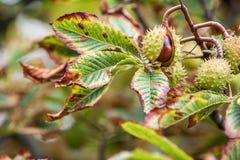 Fundo do outono com cores e borrão, Fotografia de Stock