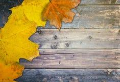 Fundo do outono com folhas fotografia de stock royalty free