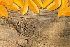 Fundo do outono com folhas coloridas imagem de stock royalty free