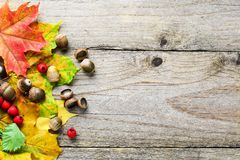 Fundo do outono com folhas de bordo e as bolotas caídas Fotografia de Stock Royalty Free