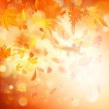 Fundo do outono com folhas naturais e luz solar brilhante Eps 10 ilustração do vetor