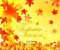 Fundo do outono com folhas Natureza do vetor Imagens de Stock Royalty Free
