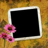Fundo do outono com frame e flores Fotos de Stock Royalty Free