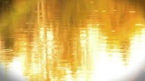 Fundo do outono com reflexão do lago da água de chuva vídeos de arquivo