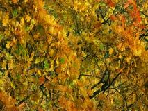 Fundo do outono com verdes fotos de stock