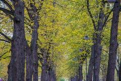 Fundo do outono Fundo do outono das partes superiores da folha amarelada imagens de stock