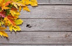Fundo do outono, folhas de bordo amarelas Imagem de Stock