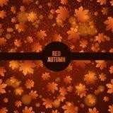 Fundo do outono folhas Vermelho-alaranjadas de uma árvore de bordo Olá!, outono Fundo para seu projeto Luzes alaranjadas abstrata Foto de Stock Royalty Free